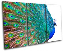 Peacock Feathers Animals - 13-0970(00B)-TR32-LO